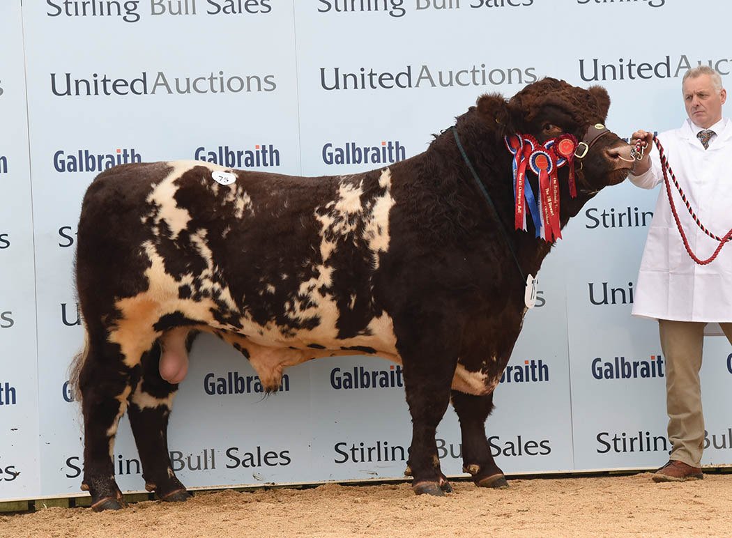 Champion, Grovewood Jackson, from Chis Mallaber sold for the top price of 12,000gns
