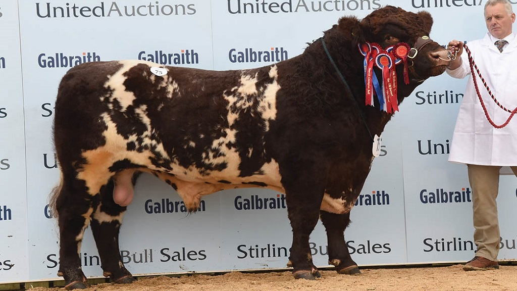 Select Shorthorn entry sells to 12,000gns
