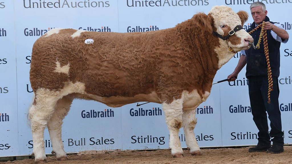 Simmental records smashed twice