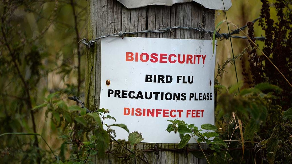Farmers warned as bird flu found in wild bird