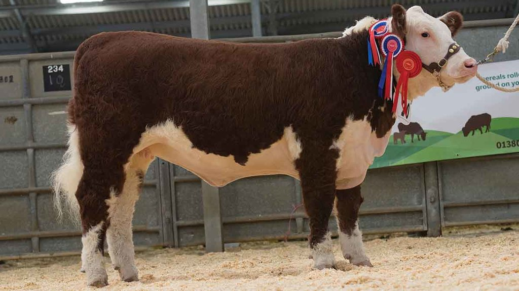 Grand champion Sky High 1 Lancome Lucy.