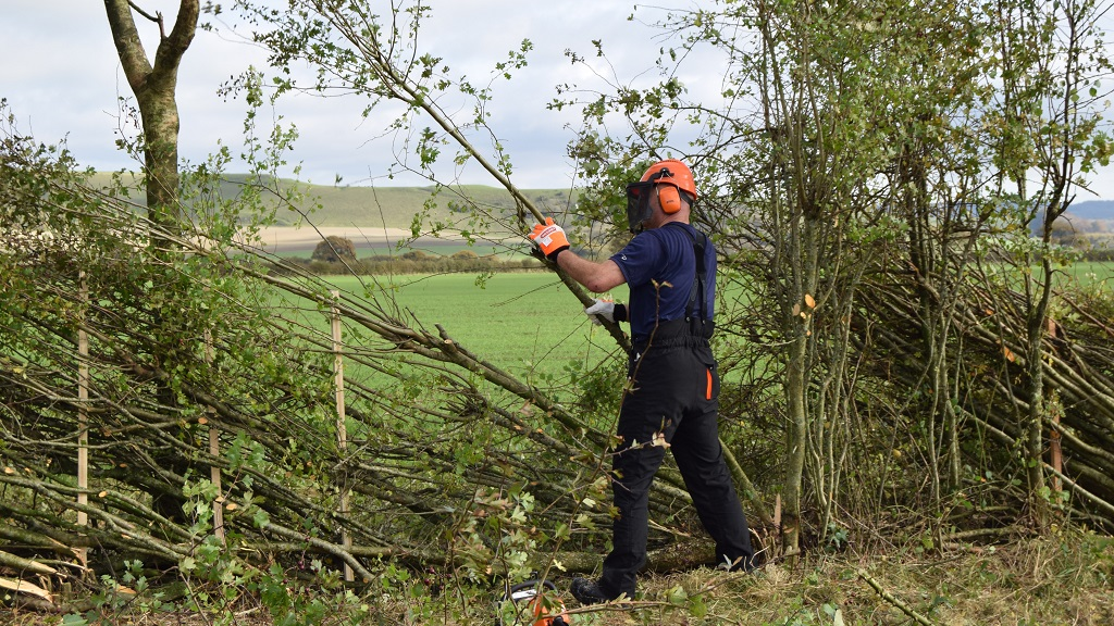National Hedge Laying Championships 2017: The results