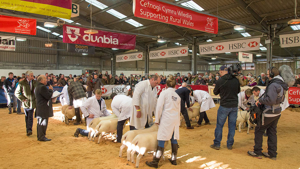Two days of fierce competition set for Royal Welsh Winter Fair