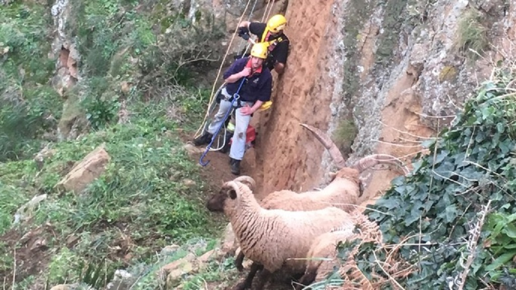 Sheep fall to their deaths after being chased over cliff by dogs off lead