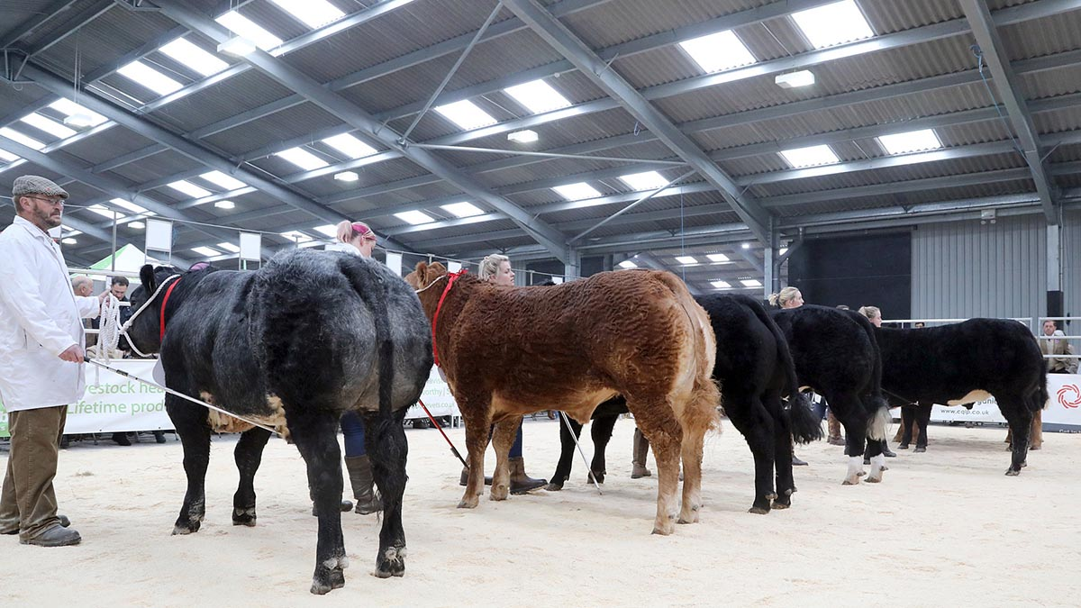 Visitors descend on Cornish Winter Fair