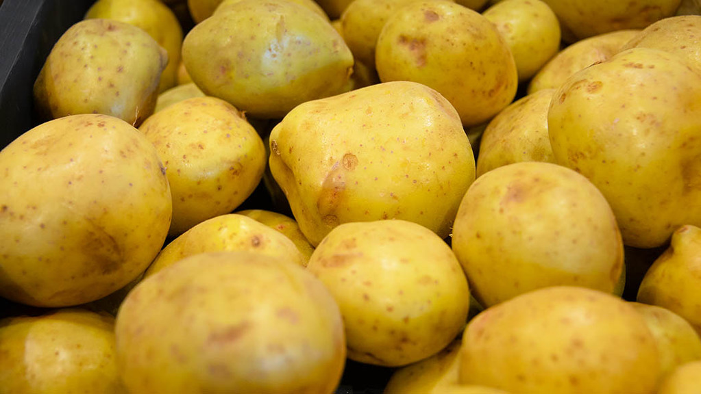 Scottish potato processing company nets £4m grant