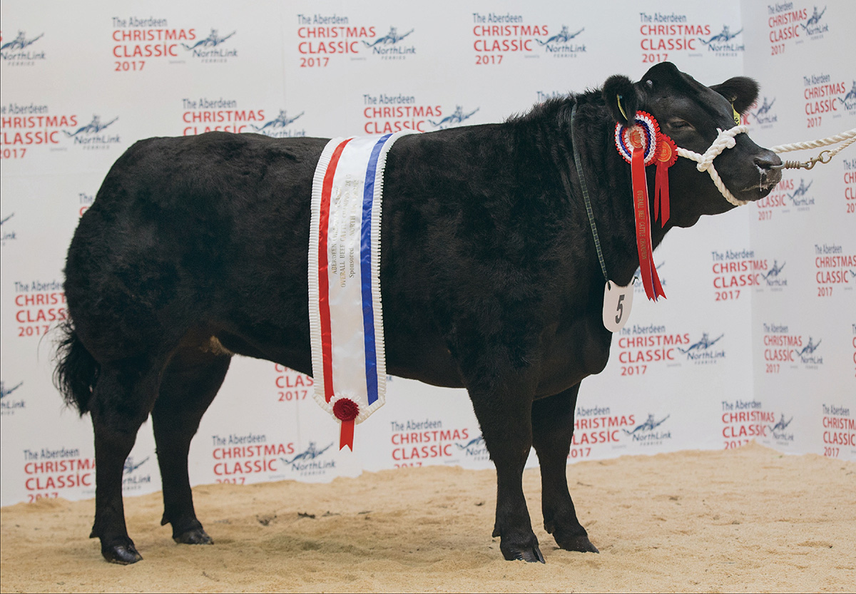 Prime cattle champion makes £4,600