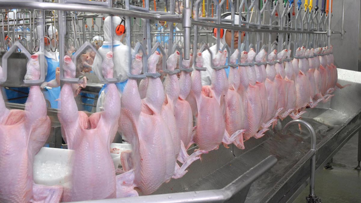 Poultry meat producers leading the way with 40 per cent drop