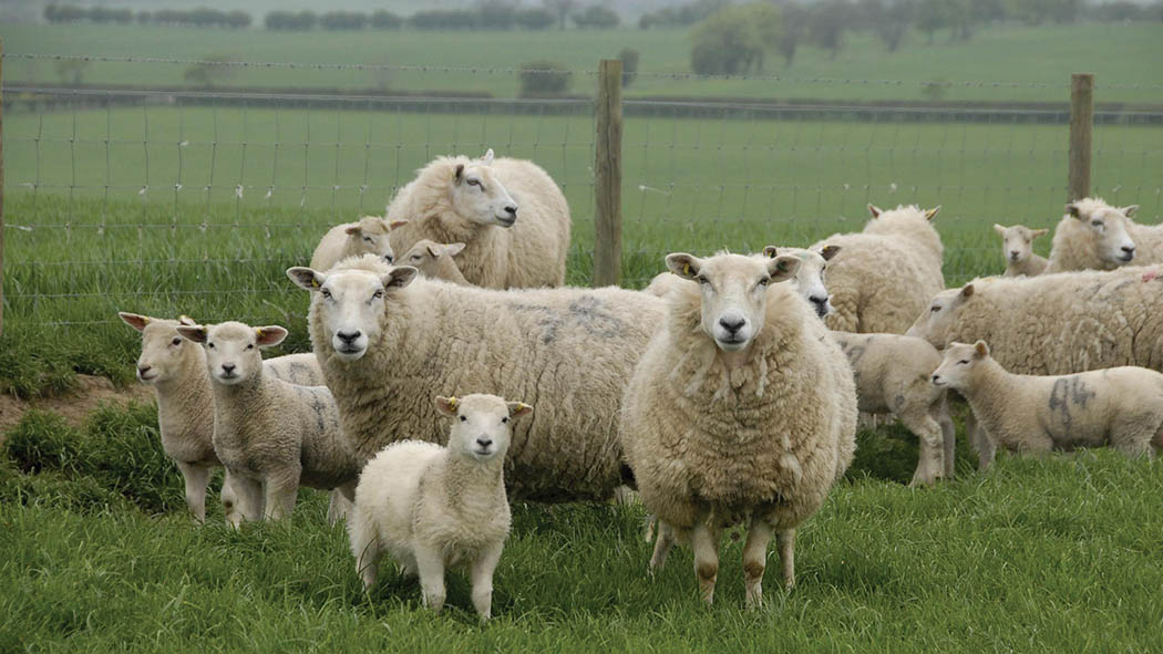 Managing the challenge of anthelmintic resistance
