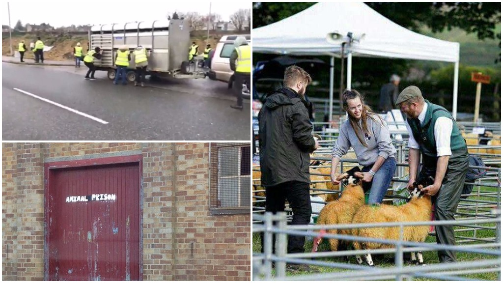 'We will always be here' - a young farmer's passionate message to animal rights activists