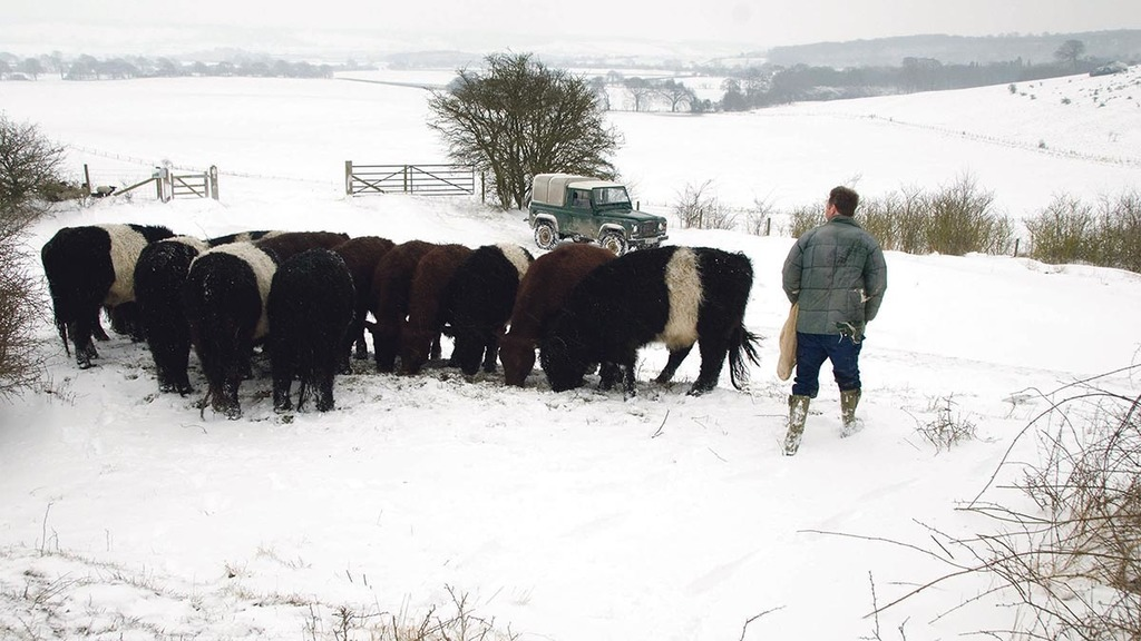 Vet Q&A: Protect your herd during the winter weather