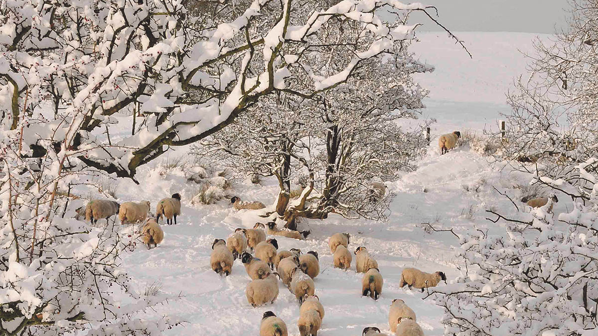Farmers warned to be on standby for adverse weather over festive period