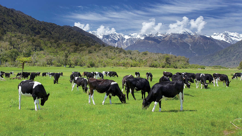New Zealand dairy industry in irrigation row