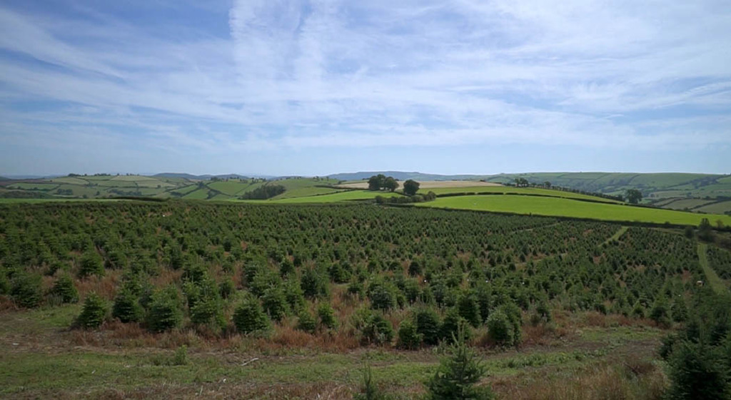 Franchise model builds on Christmas tree farm's success