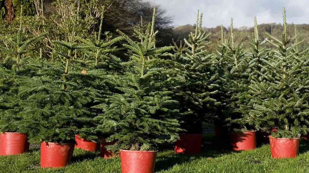 How farmers can avoid tax pitfalls on extra Christmas income