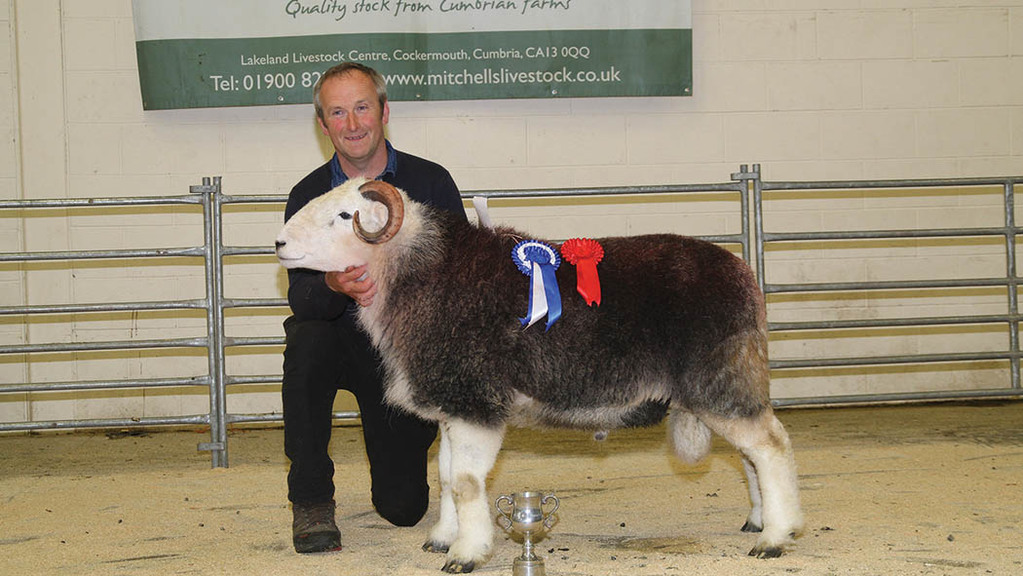 Herdwicks hit 10,000gns (Cockermouth, Mitchells)