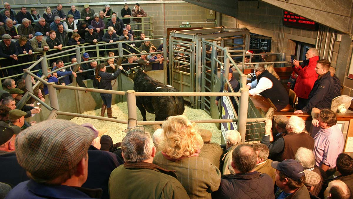 More than £6,000 donated at Christmas sale for auctioneer's son battling Leukaemia