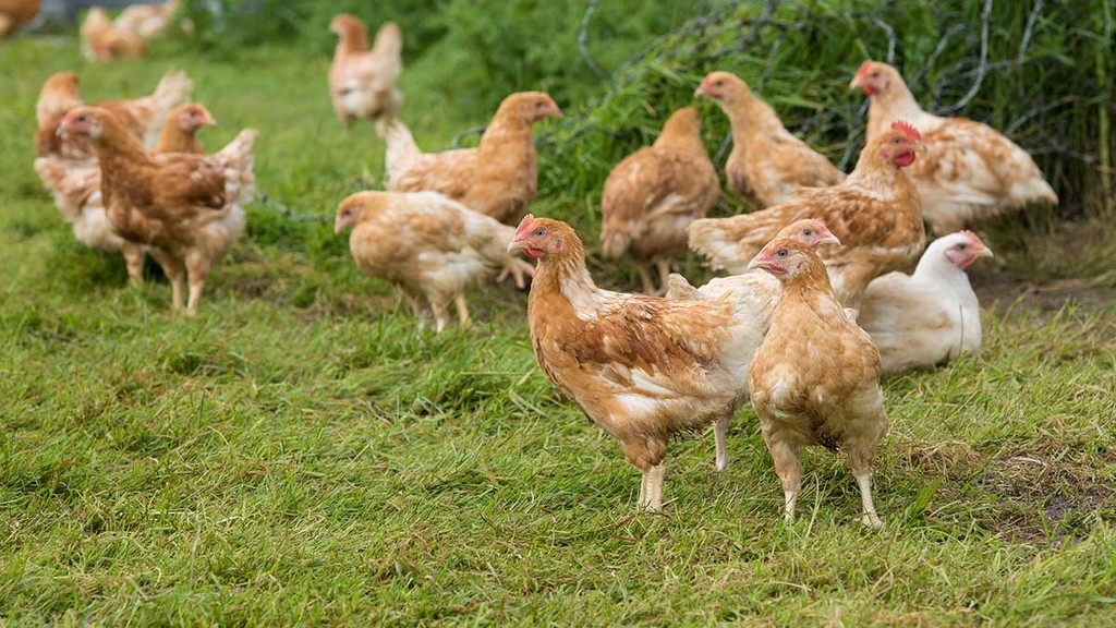 Poultry sector outlook uncertain heading into 2018