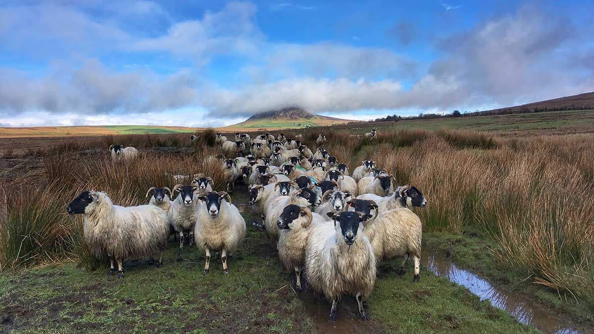 More than 100 farmers set to launch new nature-friendly farming network