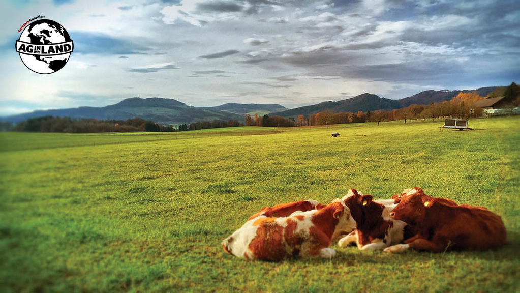 Ag in my Land: Life on a Swiss dairy farm