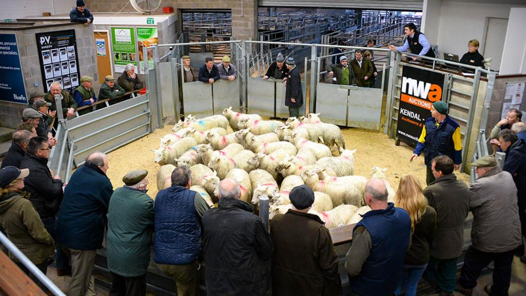 Strong entry of hoggs at J36 opener