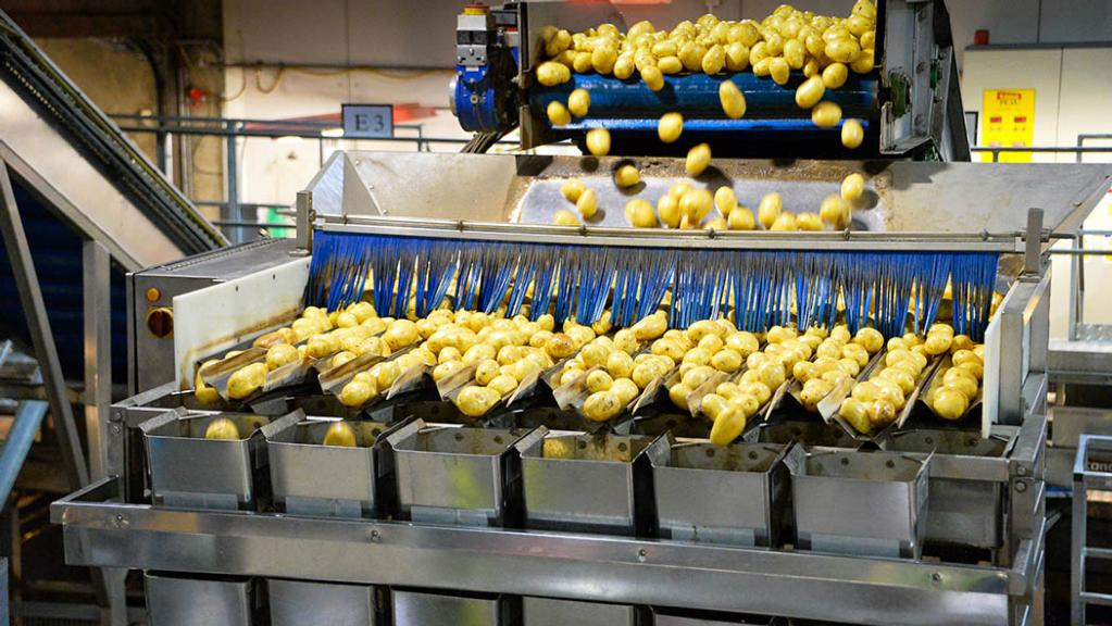 The UK's leading potato supplier feels the chill