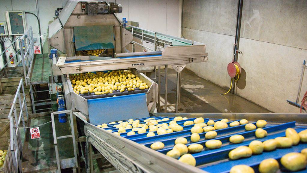 Potato growers facing increasing competition at home and abroad