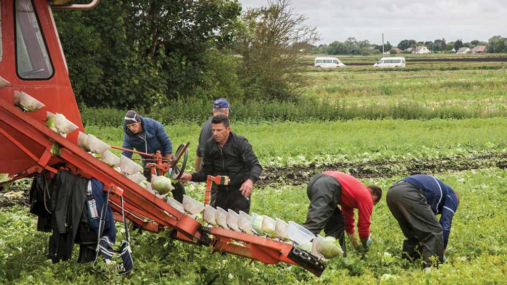 UK grower looks to move operations to EU and Africa amid labour crisis