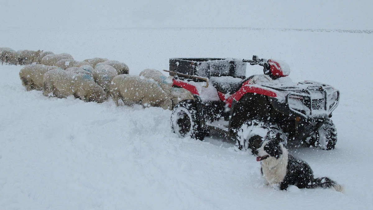 Extreme weather events cost Scottish farmers £161 million in 2017-18