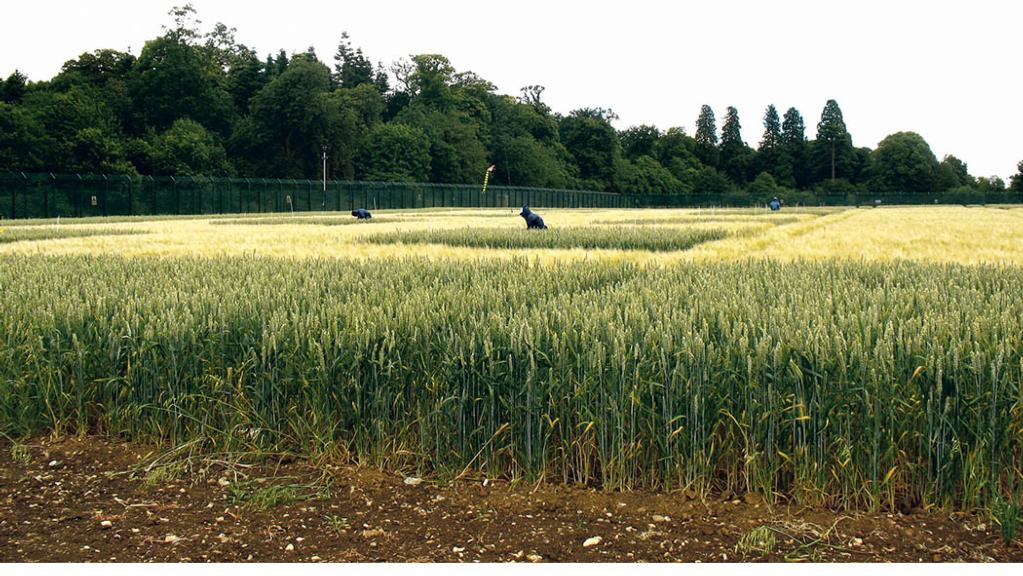 Rothamsted seeks farms for wheat productivity research