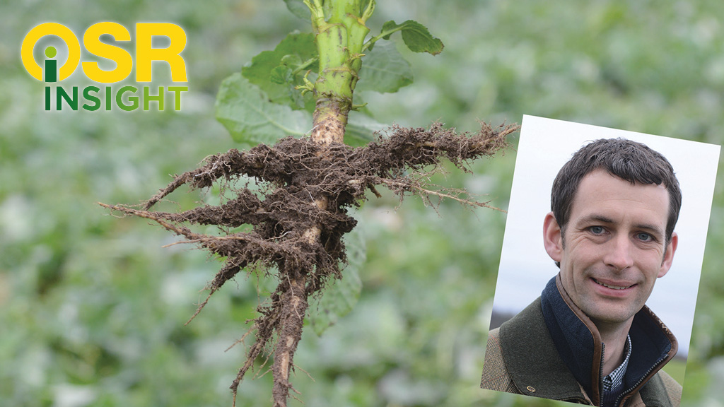 Insight in to OSR: Rooting for early spring growth