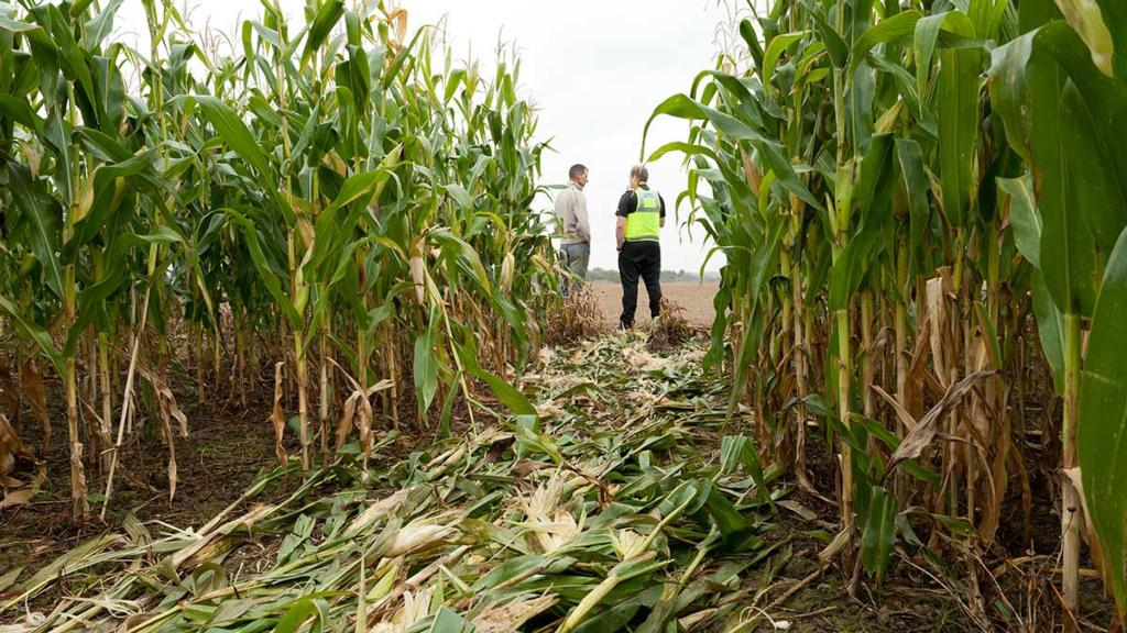 Farmers warned as brazen thieves work in broad daylight to target farms