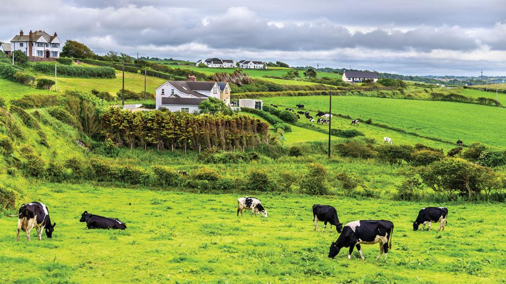 Traceability a key selling point as Ireland leads the way in exports