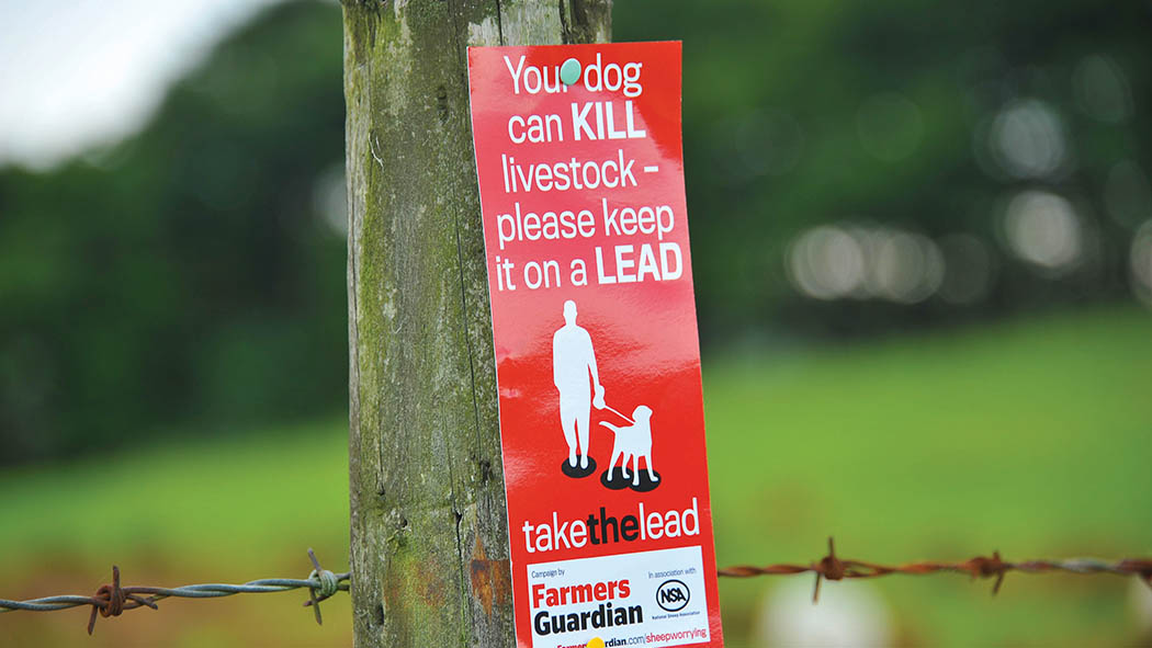 'Stiffer penalties are needed' - eight pedigree lambs mauled by dog