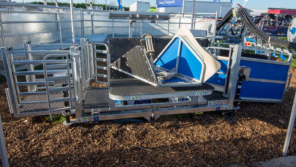 Clipex automated sheep weighing