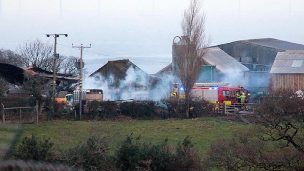 Five calves dead after suspected arson attack on farm
