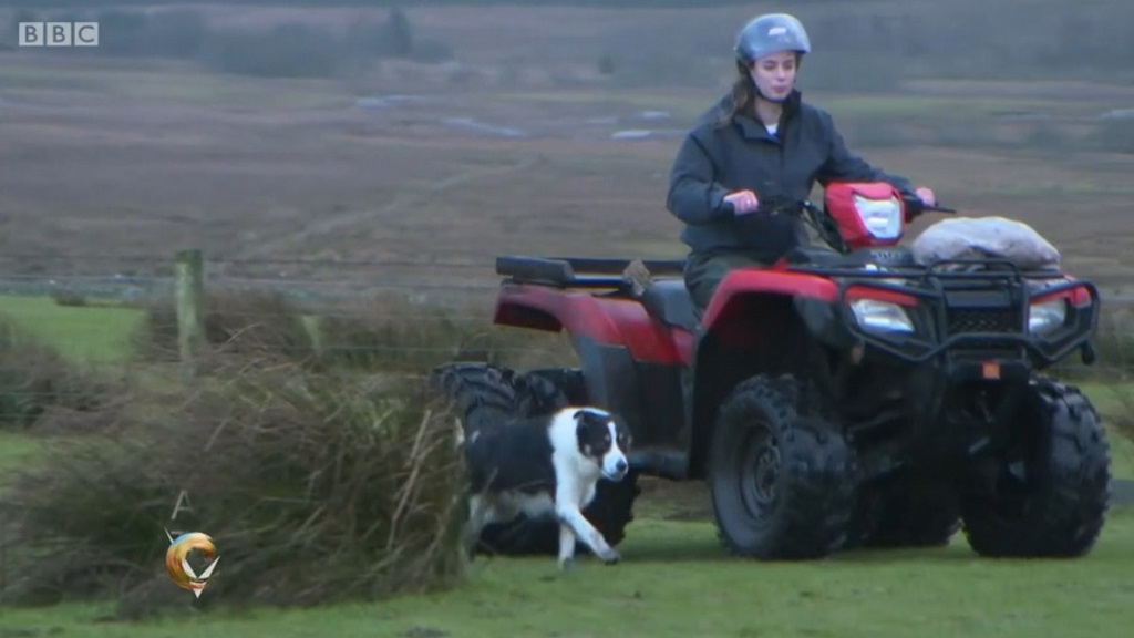 'It's not okay!' - Young farmer speaks out after being targeted by 'militant vegans'