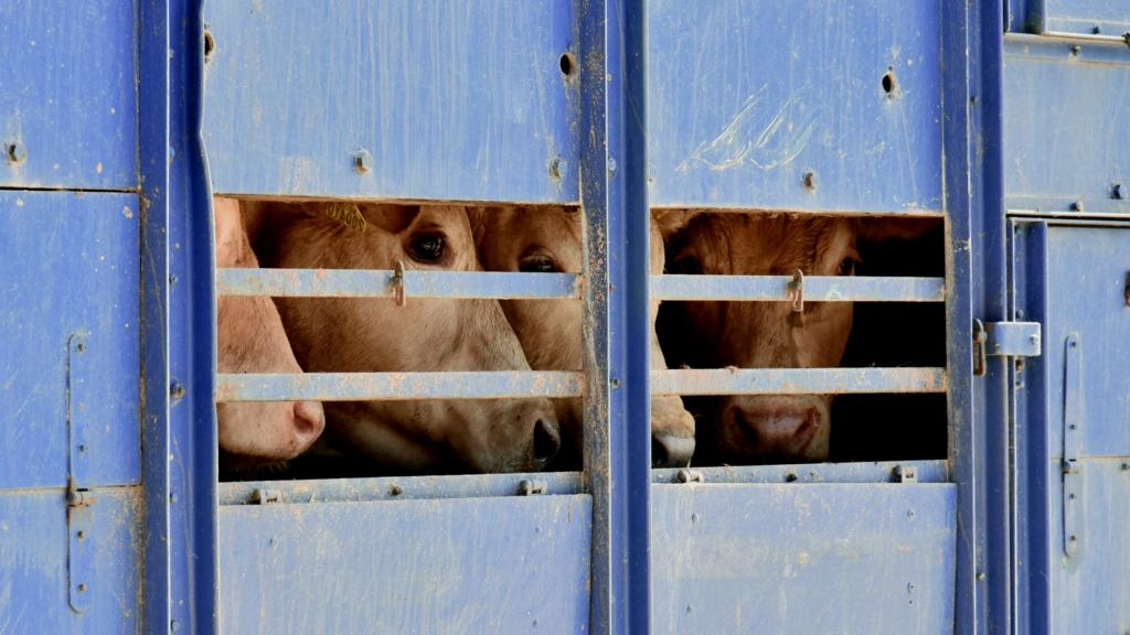 TB SPECIAL: Can auction marts do more to stop disease spread?