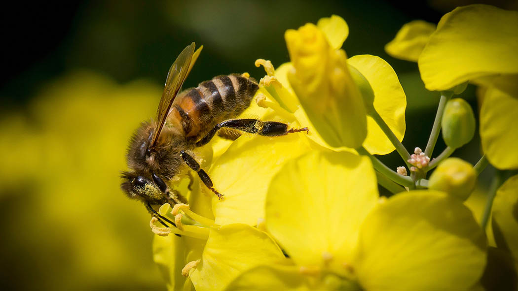 'Bee-friendly' neonics in the pipeline following latest Rothamsted Research