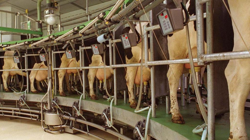 Labour shortage may hit cow and farmer welfare