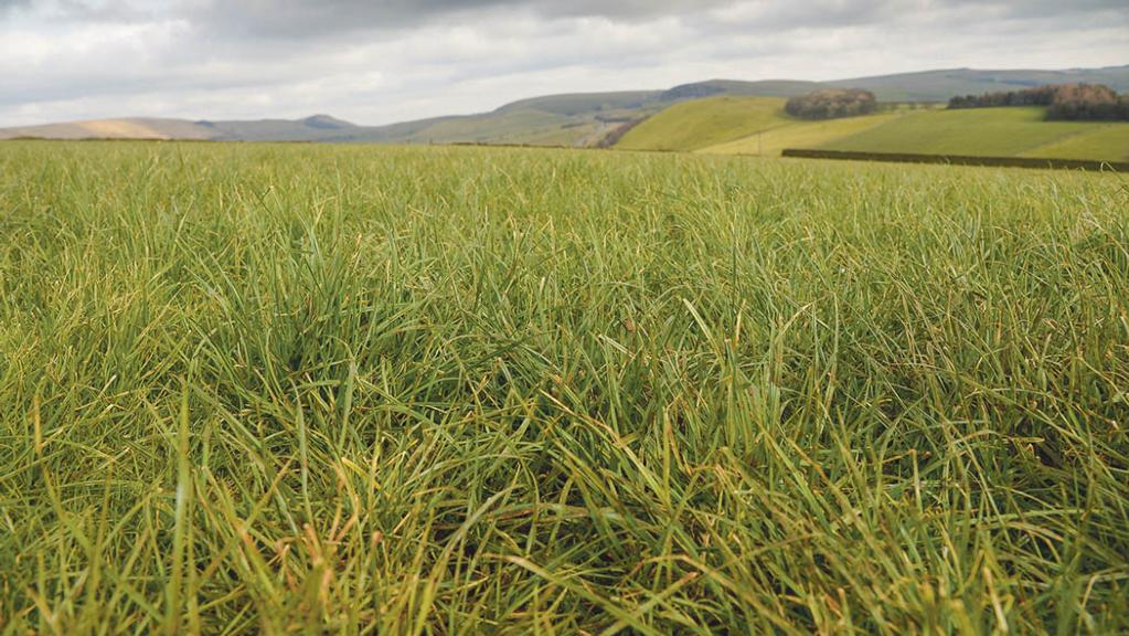 Big opportunities to increase productivity of grassland