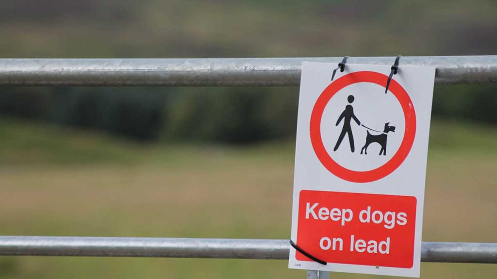 Give Wales the powers to tackle dog attacks on livestock, says Plaid Cymru