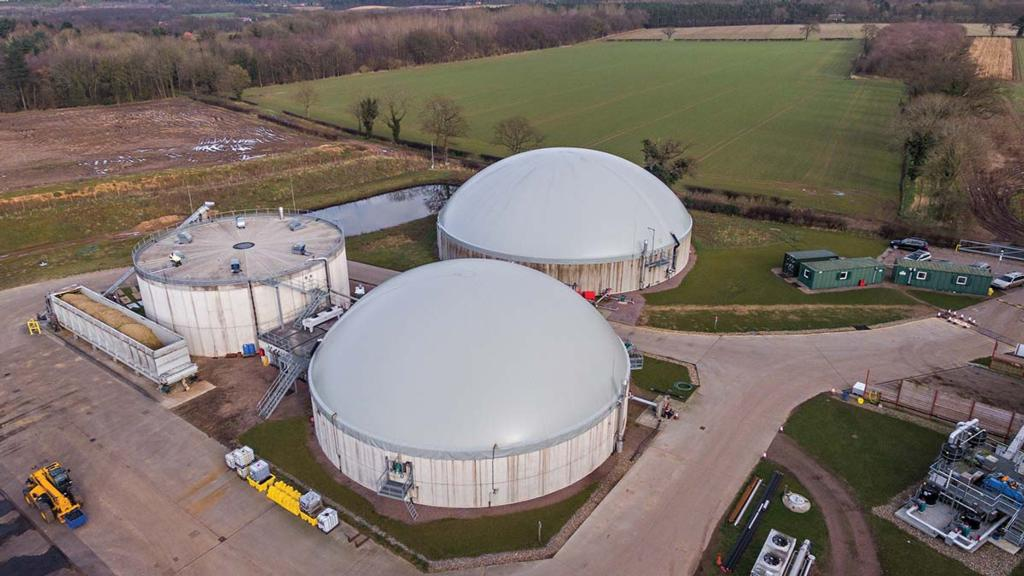 Top tips on growing maize for anaerobic digestion