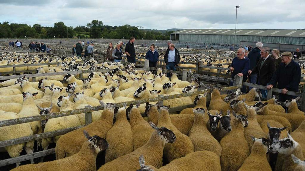 UK auction marts set for major investments