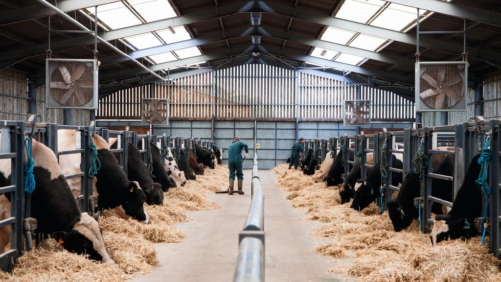 An insight in to a new cutting edge breeding programme