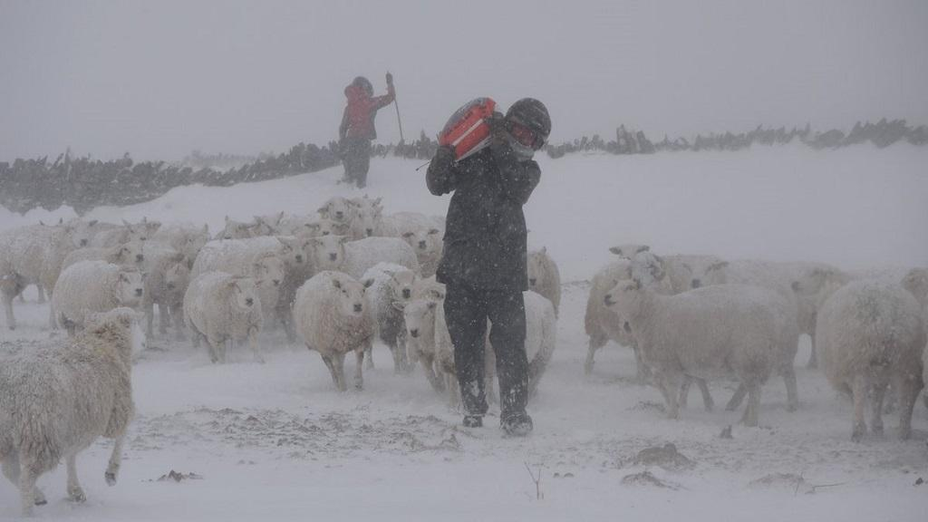 IN PICTURES: Farmers battle the elements as wind and snow batters UK