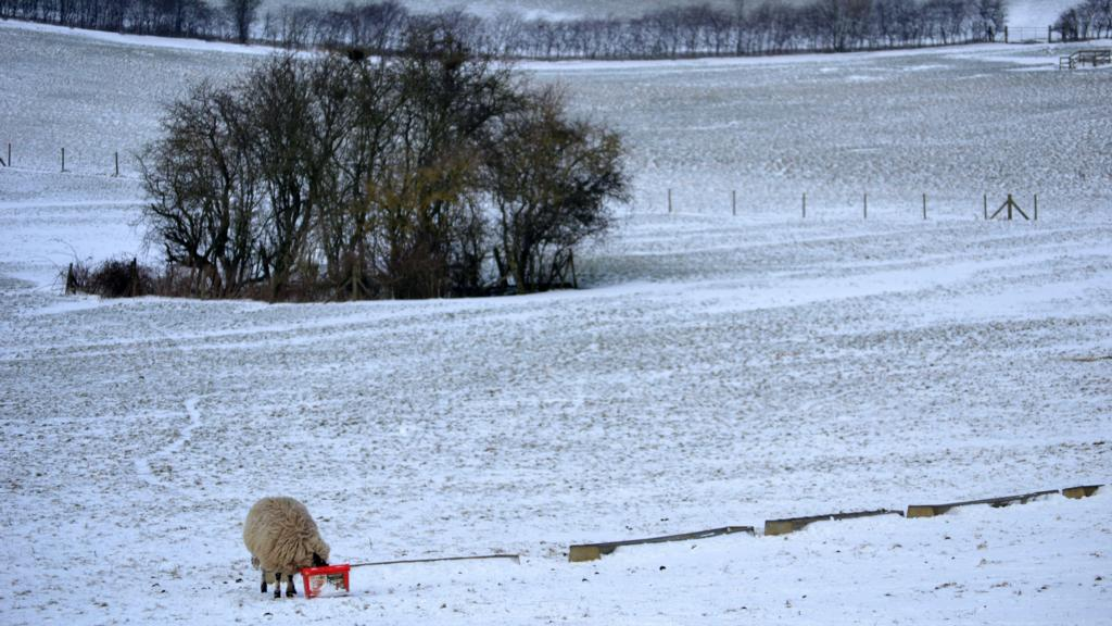 Weather misery continues for farmers as snow forecast in parts of the UK