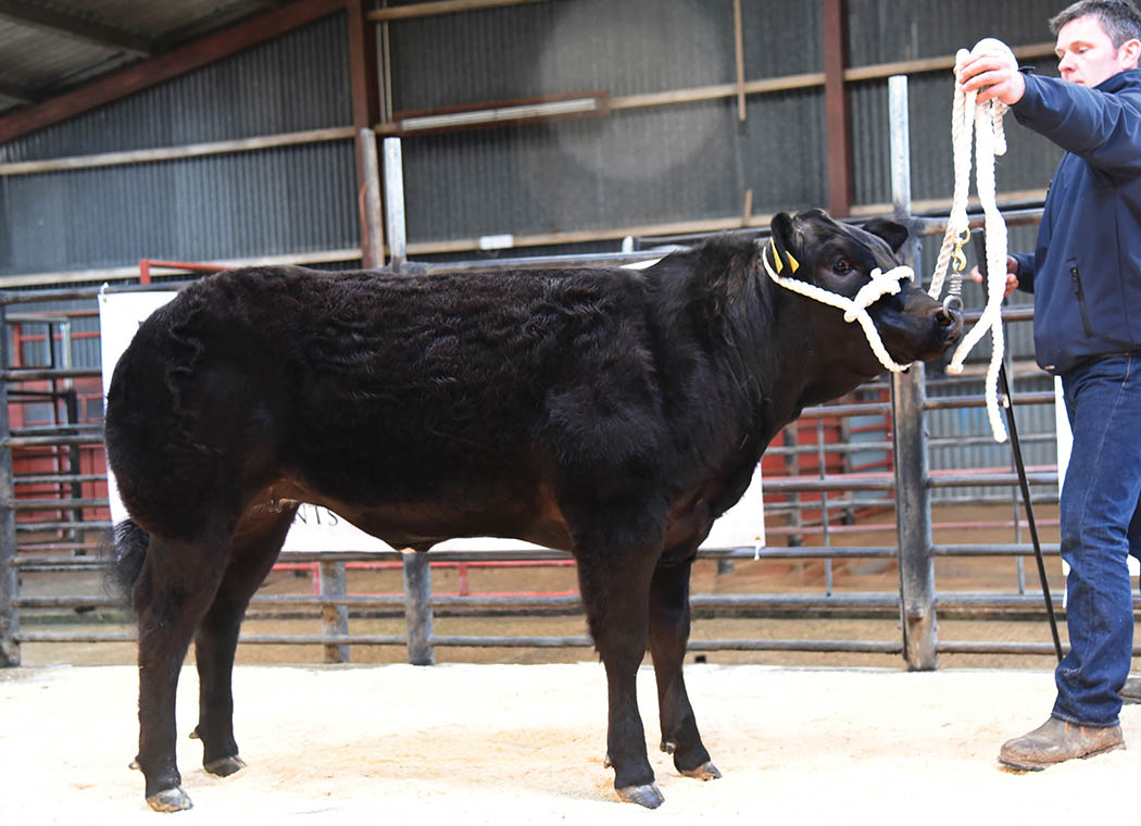 A Limousin heifer from Garrowby Farms which made £3200