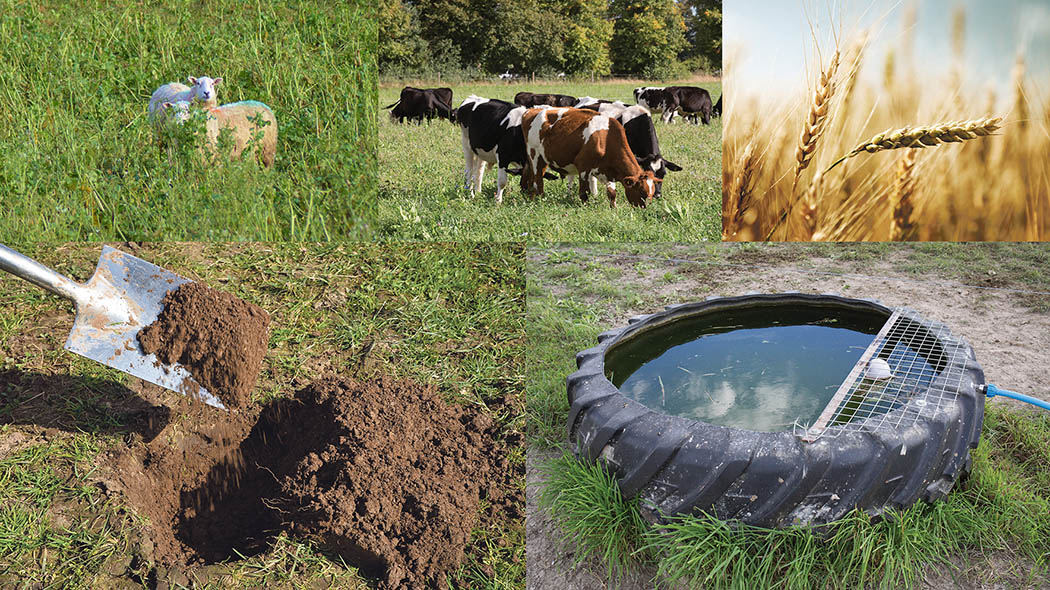 SERIES: Introducing livestock to arable systems