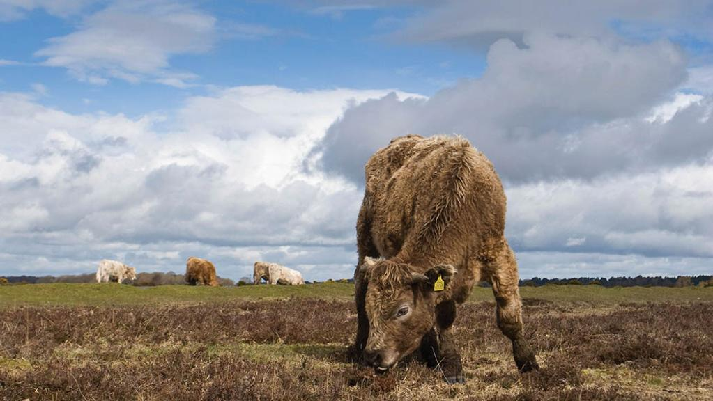 Hundreds of commoners in New Forest fail to receive BPS payments